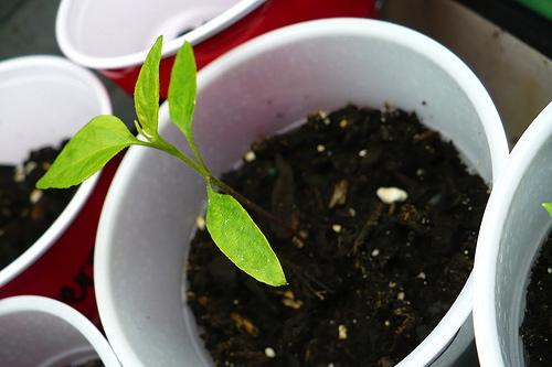 seed_starting
